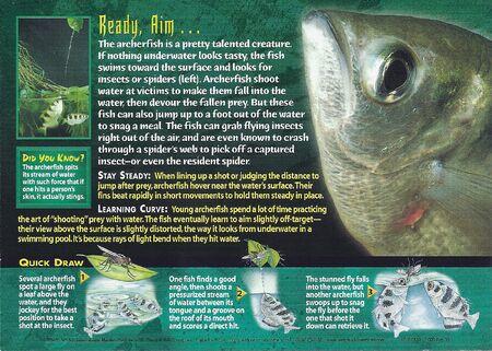 Archerfish back