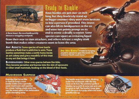 Rove Beetles back