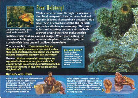 Scorpionfish back