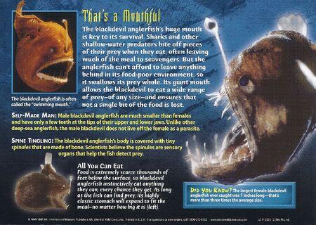 Blackdevil Anglerfish back