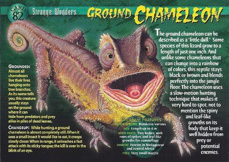 Ground Chameleon front