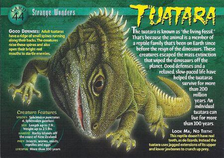 Tuatara front