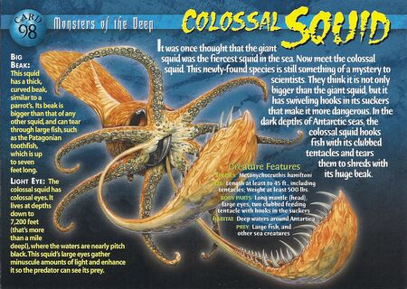 Colossal Squid front