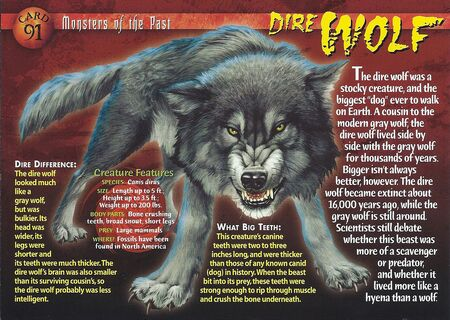 Dire Wolf front