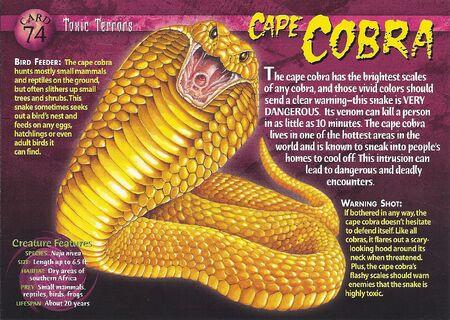 Cape Cobra front