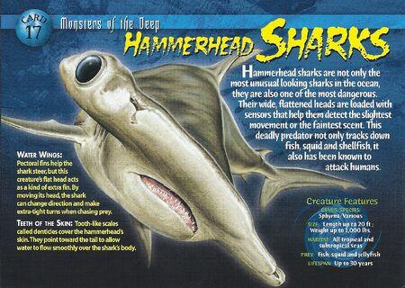 Hammerhead Sharks front
