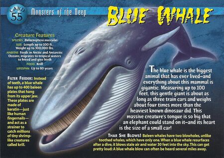 Blue Whale front