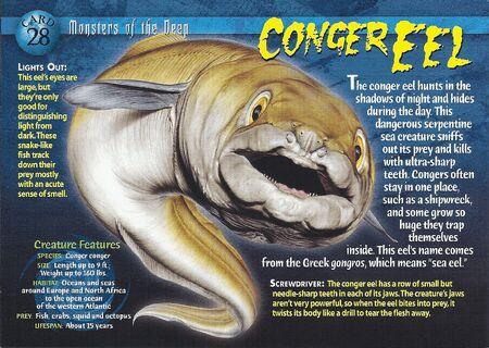 Conger Eel front