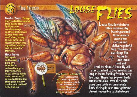 Louse Flies front