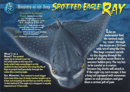Spotted Eagle Ray front