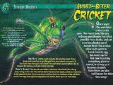 Wart-Biter Cricket