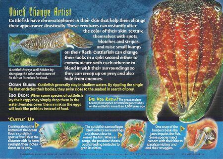 Cuttlefish back