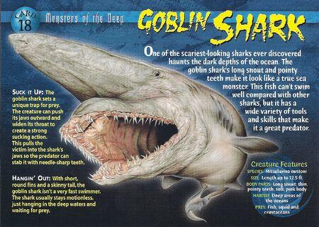 Goblin Shark front
