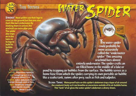 Water Spider front