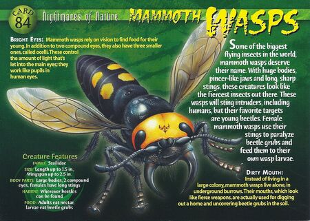 Mammoth Wasp front