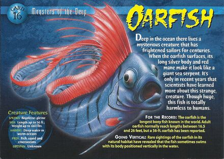 Oarfish front