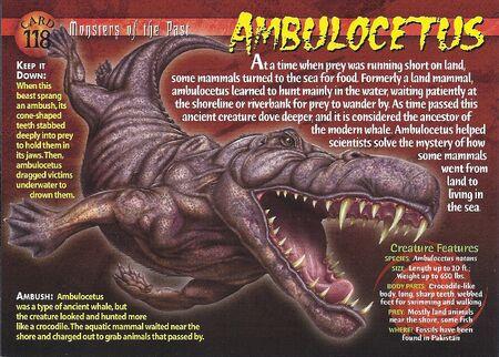 Ambulocetus front