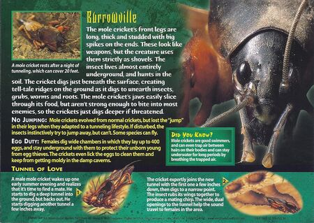 Mole Crickets back