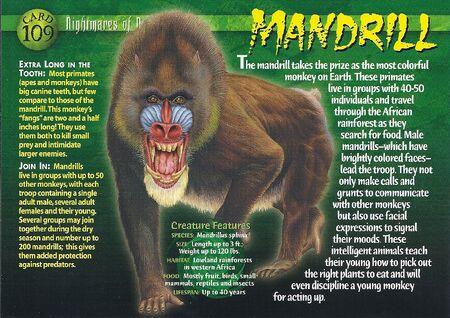 Mandrill front