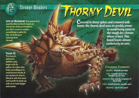Thorny Devil front