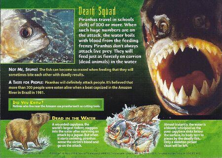 Piranhas back