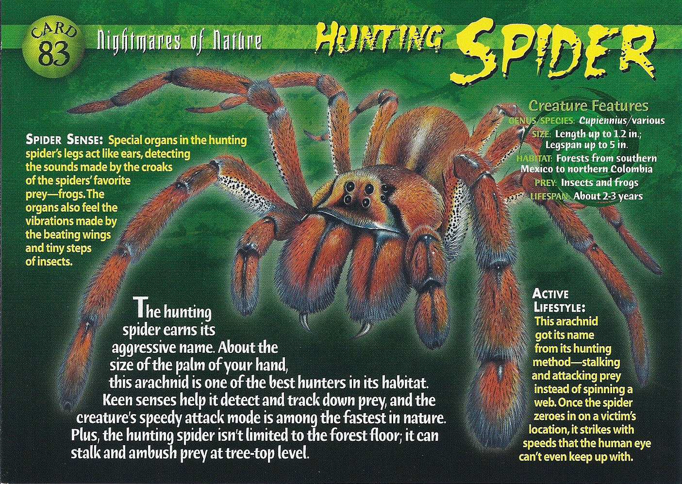 Wood Tv 8 Mosquito Hunting Spider | Weird...