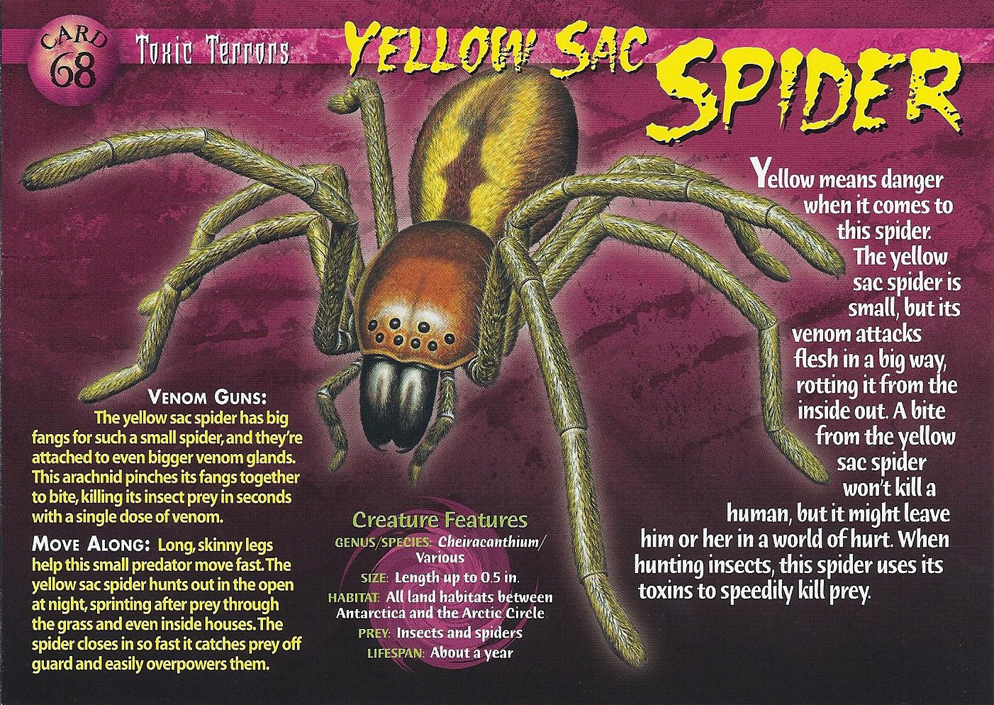 Yellow Sac Spider Wierd N Wild Creatures Wiki Fandom