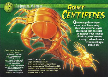 Giant Centipedes front