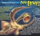 Dog Whelk