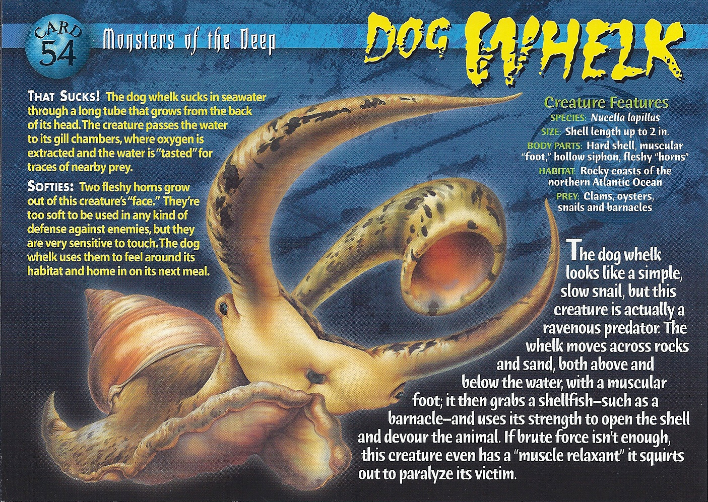 dog whelk weird n wild creatures wiki fandom powered