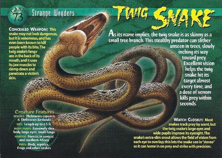 Twig Snake front