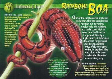 Rainbow Boa front