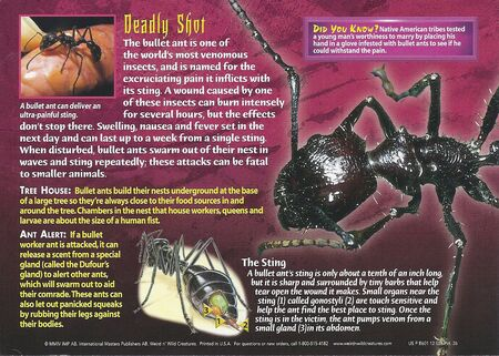 Bullet Ant back