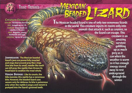 Mexican Beaded Lizard front