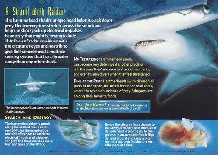 Hammerhead Sharks back