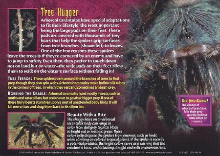 Arboreal Tarantula back