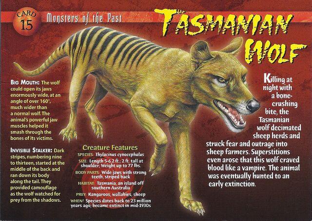 File:Tasmanian Wolf front.jpg