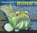 Weeverfish