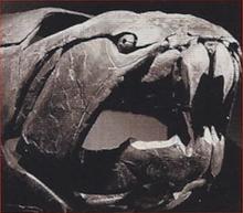 Dunkleosteus Back Image