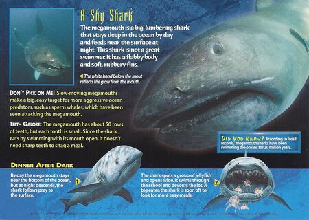 Megamouth Shark back