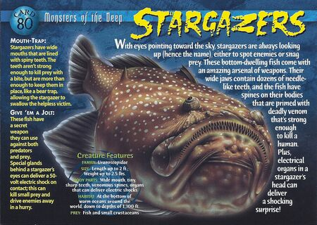 Stargazers front