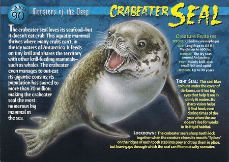 Crabeater Seal front