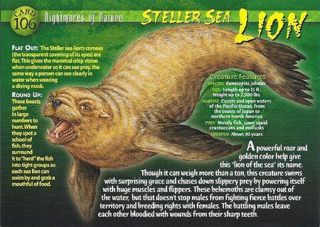 Steller Sea Lion front