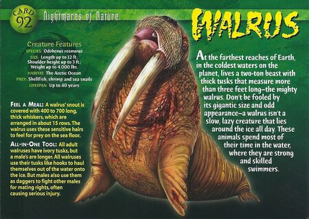 Walrus front