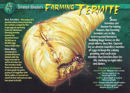 Farming Termite front