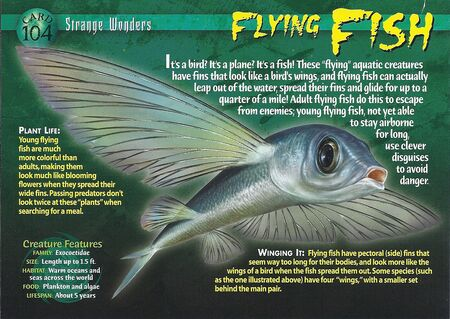 Flying Fish front