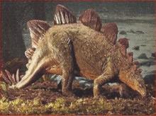 Stegosaurus Back Image