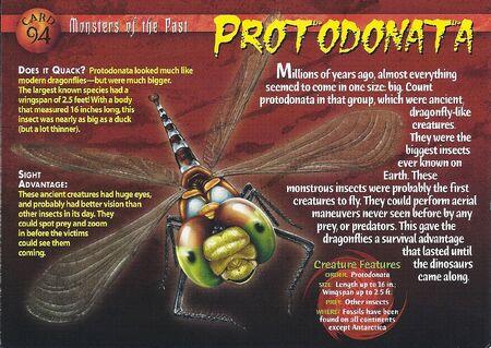 Protodonata front