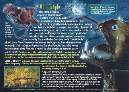 Bearded Anglerfish back