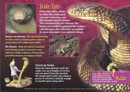 King Cobra back